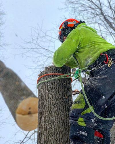 Great Lakes Tree Experts Southampton Port Elgin